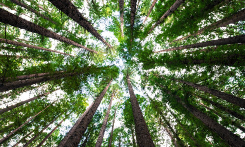 Picture of a forest from the ground up, representing our new climate neutral website.